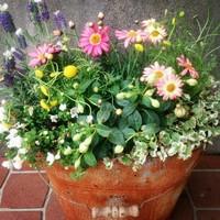 「花ほたる」を使った寄せ植えを作りた...