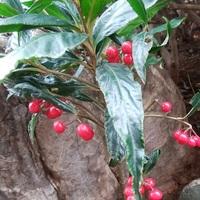 「昨日の庭の様子」📷20181211 地植え  ...