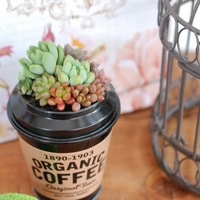 コーヒー缶に寄せ植え。 だんだんと春め...
