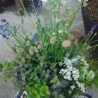 特別な鉢に ギャザリング✴‥材料のお花達...