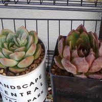 右側は、けっこう育ってきたので最近植...