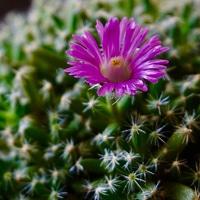 紫晃星  たった1つの花です🌸