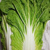 初めて白菜を育てました❗ 種からとハー...