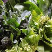 白菜と小松菜とブロッコリーのつぼみ野...