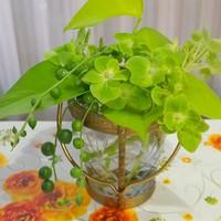 花瓶花  お抹茶色の紫陽花を 花友さんか...