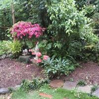 3⃣📷2つの花壇で咲いていた、パンジー...