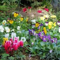 2⃣📷今一番盛り上がっている側面花壇......