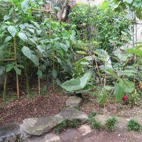 1⃣📷庭先3つの花壇畑...🔶左から常に野...