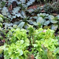 📷小さな野菜畑で盛り上がる、お手軽サラ...
