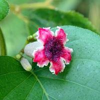 花びらも朱に染まる。 アブノーマル!?...
