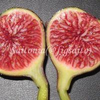 若すぎる木に実った果実は、小ぶりで果...