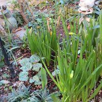 2⃣📷球根だけの小さな花壇...🔶一昨年に中...