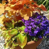 水引の葉が大きくなって 他の植物とバラ...