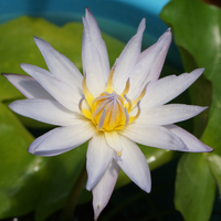 07/21 ブリンクの2日目の花