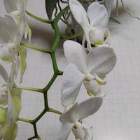 蕾が9つある中で、一か月かけて、7個咲...