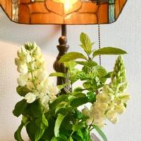 ルピナスの切り花とミント🍃
