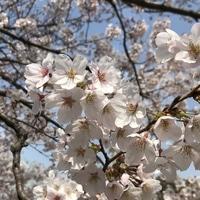 2019年3月25日  横浜イングリッシュガー...