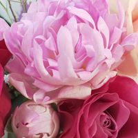 変わった花びらのバラ🌹 シーアネモネ