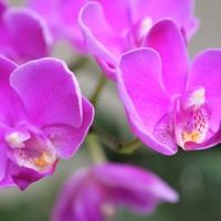 胡蝶蘭 8/28  1花茎は花が終わってしま...