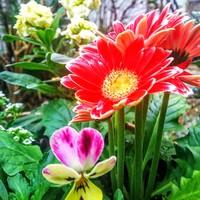 可愛い❤️寄せ植え