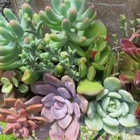 ①多肉植物の寄せ植え