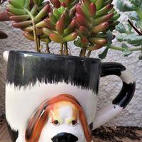 犬の絵柄鉢に植えた多肉植物の虹の玉