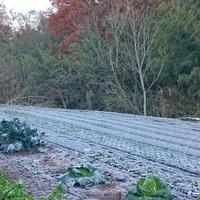 裏の畑 霜で真っ白です❗  今朝は一番の...