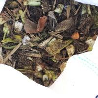 12/15 (C)生ごみ堆肥 温度は特に上がっ...