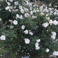 2018/10/24 福岡市植物園 満開♡