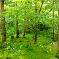 一昨年の夏休みに行った高野山での景色...