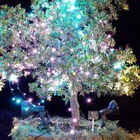 ネームプレートには、いちごの木と書い...