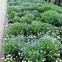 名城公園の花達