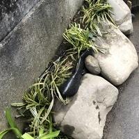 庭から出てきた大きな石はミニロックガ...