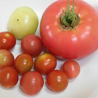 7/5 トマト🍅各種 麗夏🍅は初収穫です。
