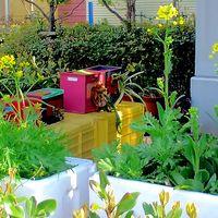 水菜と小松菜の花