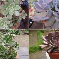 2⃣大きな鉢に植え替えた多肉植物たち 左...