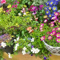 玄関の前のお花です💐