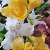 疲れた心にビタミン💛 お花を室内で愛で...