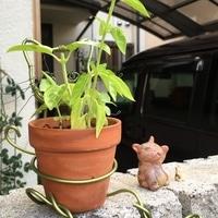 ワイヤーで作った猫の鉢スタンドです。 ...