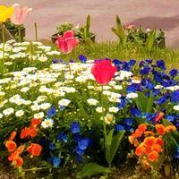 隣りの市の府道沿いの花壇に咲く花々達😀...