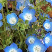 玄関に飾って一週間 花の大きさも 庭の...
