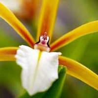 夢の島 熱帯植物園