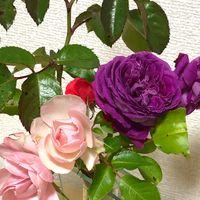 庭のバラを切り花にしました。
