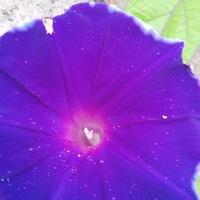 とても濃い紫色で暑さも忘れそうなくら...