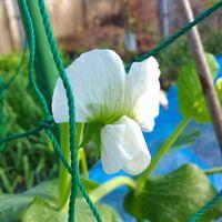 えんどう豆のお花の初開花~🌸