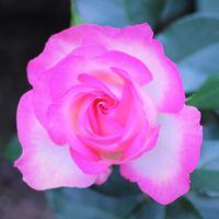 ホワイトに鮮やかな蛍光ピンク色でした~
