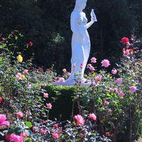 #月曜には薔薇を 乙女像も満開になり