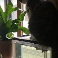猫がイタズラするので困ってしまい吊る...