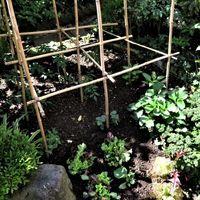 今年も小さな野菜畑に、野菜の植え揃い...
