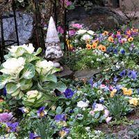 🌻庭先で唯一花を咲かせ賑わいを見せる2...